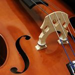 Orchestral Stringed Instruments